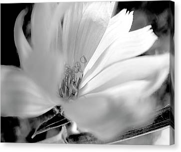 Flower Sun Light, Black And White,  Canvas Print