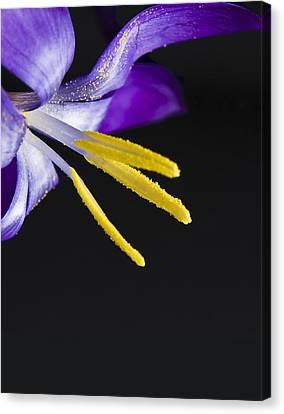 Flower Canvas Print by Svetlana Sewell