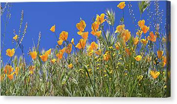 Canvas Print featuring the photograph Flower Trail Diamond Valley Lake by Cliff Wassmann