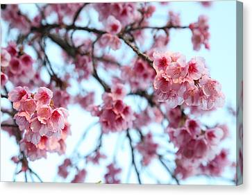 Canvas Print featuring the photograph flowering of the almond tree, Jerusalem by Yoel Koskas