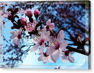 Flowering Of The Plum Tree 6 Canvas Print by Jean Bernard Roussilhe