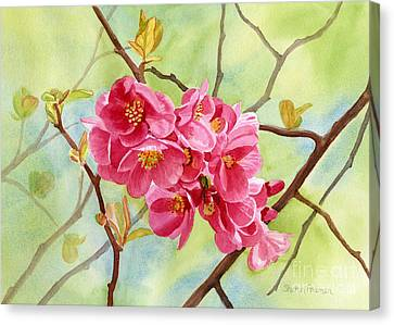 Flowering Quince With Background Canvas Print by Sharon Freeman