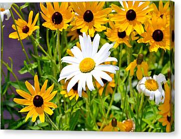 Botanical Canvas Print - Flowering Rudbeckia 6 by Lanjee Chee