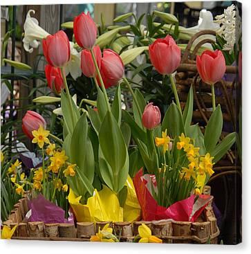 Flowers 117 Canvas Print by Joyce StJames