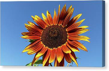 Flowers-160821-345 Canvas Print by First Light Images
