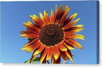 Flowers-160821-345 Canvas Print