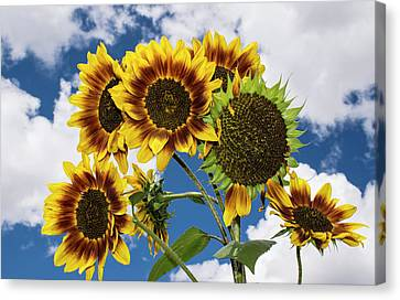 Flowers-160830-452 Canvas Print