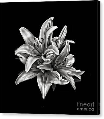 Flowers 8449 Canvas Print