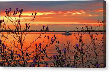 Flowers Along The Shore At Tibbetts Point  Canvas Print