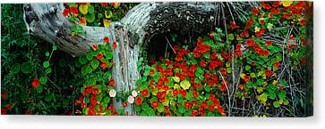 Flowers And Log, Route 1, Northern Canvas Print by Panoramic Images