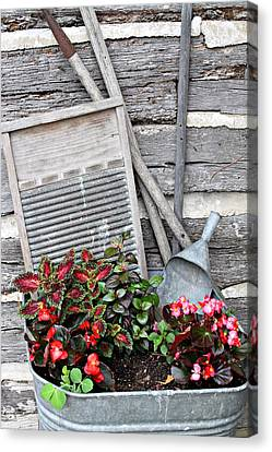 Flowers And Plants In Wash Tub Canvas Print by Linda Phelps