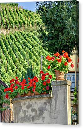 Flowers And Vines Canvas Print by Alan Toepfer