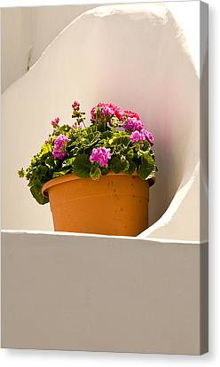 Flowers And White Wall Canvas Print by Xavier Cardell