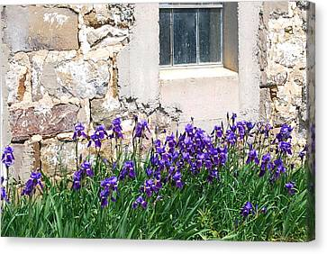 Flowers And Worn House Canvas Print