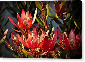 Canvas Print featuring the photograph Flowers At Sunset by AJ Schibig