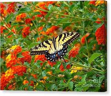 Flowers For Butterflies Canvas Print by Sue Melvin