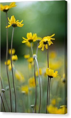 Aperture Canvas Print - Flowers by Hayden Hatch