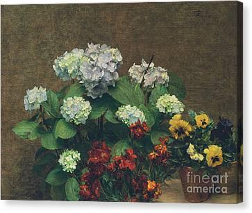 Flowers  Hydrangea, Wallflowers, Two Pots Of Pansies Canvas Print