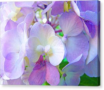 Flowers Hydrangeas Art Prints Floral Garden Baslee Troutman Canvas Print by Baslee Troutman