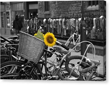 Flowers In Bike Canvas Print by David Warrington