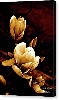 Flowers In Sepia  Canvas Print