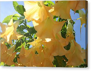 Flowers In The California Sun Canvas Print