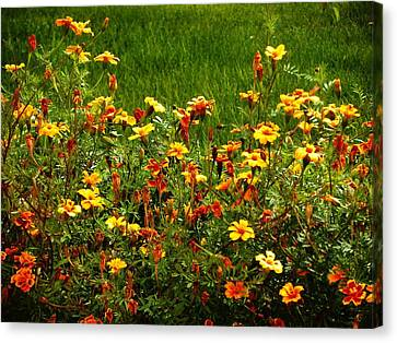 Flowers In The Fields Canvas Print