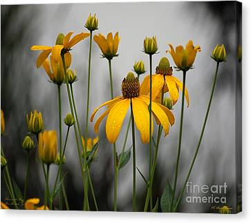 Flowers In The Rain Canvas Print by Robert Meanor