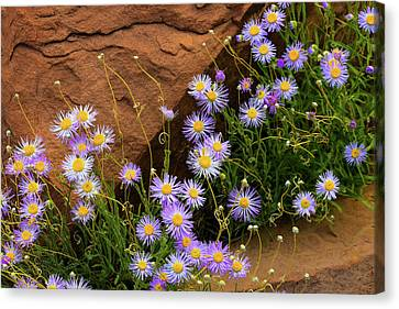Flowers In The Rocks Canvas Print by Darren White