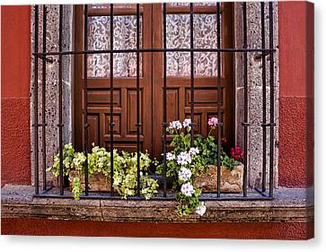 Flowers In Window Box San Miguel De Allende Canvas Print by Carol Leigh