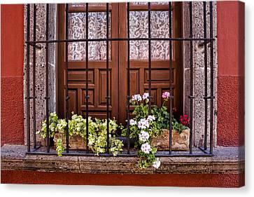 San Miguel De Allende Canvas Print - Flowers In Window Box San Miguel De Allende by Carol Leigh