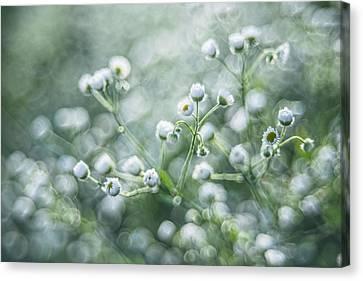 Canvas Print featuring the photograph Flowers by Jaroslaw Grudzinski