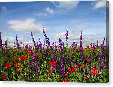 Flowers Of The Field Canvas Print by Diana Kraleva