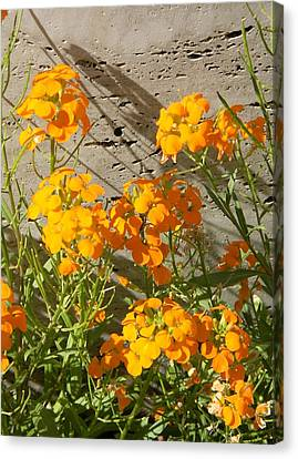 Flowers Orange 2 Canvas Print by Warren Thompson