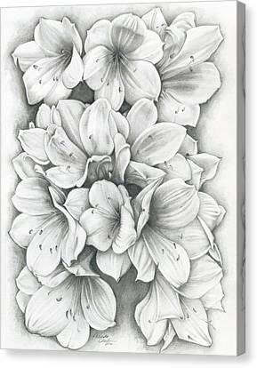Clivia Flowers Pencil Canvas Print