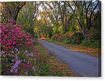 Flowers - Spring Fling Canvas Print by HH Photography of Florida