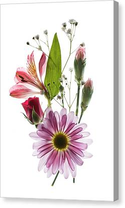 Flowers Transparent 1 Canvas Print by Tom Mc Nemar