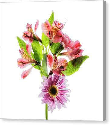 Flowers Transparent  2 Canvas Print by Tom Mc Nemar