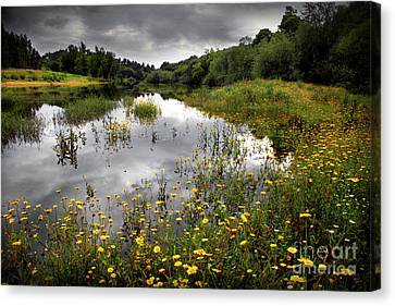 Flowery Lake Canvas Print by Carlos Caetano