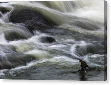 Flowing Contemplation Canvas Print by Arne ?stlund