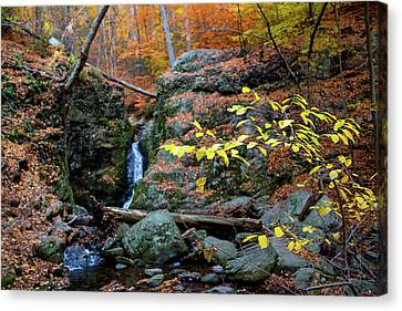 Canvas Print - Flowing Into Autumn by Karol Livote