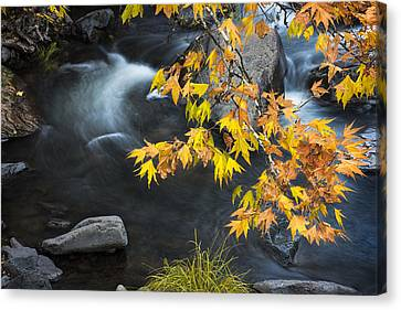 Flowing Oak Creek Canyon Under Colorful Leaves Canvas Print