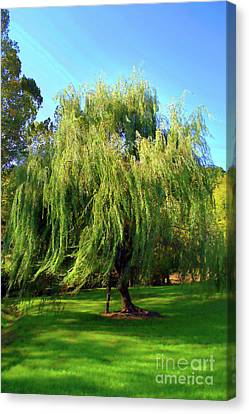 Flowing Willow Painted Canvas Print by Skip Willits