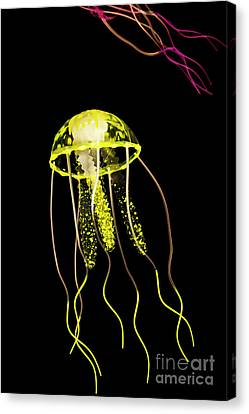Flows Of Yellow Marine Life Canvas Print