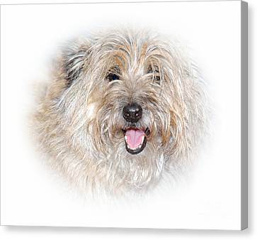 Canvas Print featuring the photograph Fluff Pup by Debbie Stahre