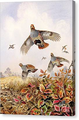 Flock Of Birds Canvas Print - Flushed Partridges by Carl Donner