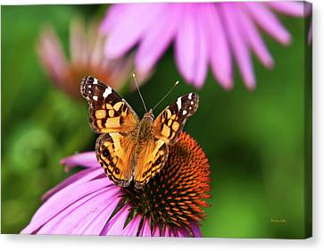 Fluttering Breeze Butterfly Canvas Print by Christina Rollo