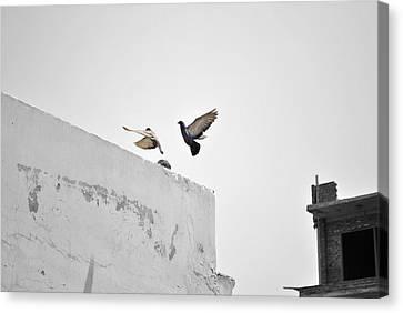 Fluttering Pigeons Canvas Print