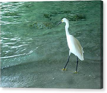 Egret Under Bridge Canvas Print