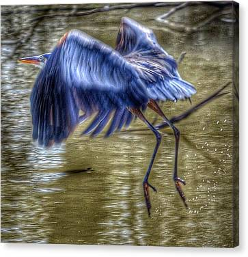 Canvas Print featuring the photograph Fly Away by Sumoflam Photography